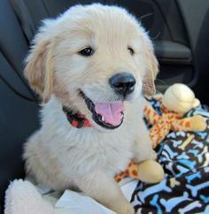 Timber the Golden Retriever....adorable profile pic. Happy puppy!