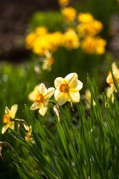 prettylittleflower:    to brighten your day on Flickr.