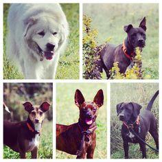 Sweet, happy campers! #evasplaypupspa #dogs #dogcamp #doggievacays #smilingdogs #dogsofinstagram #endlessmountains #mountpleasant #PA #pennsylvania