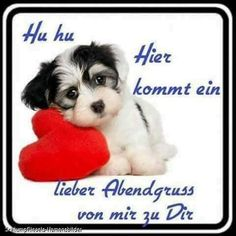 Body And Soul, Sweet Dreams, Animals And Pets, Love You, In This Moment, Humor, Funny, Facebook, Motivation