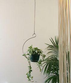 Mr Kitly Curved Ceiling Plant Hanger