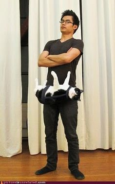 Go go gadget cat!
