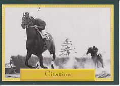 Citation 45 Starts Was Loaded With St. Simon Bloodlines Crossing At Least 7 Times In First Five Generations. Noor, Another Horse Loaded With St. Simon, Was Only Horse To Ever Beat Citation More Than Once Of All In Citation Last Year Of Racing. Calumet Farm, Horse Racing, Race Horses, Horse Names, Fifth Generation, Thoroughbred Horse, Beautiful Horses, Moose Art, Animals