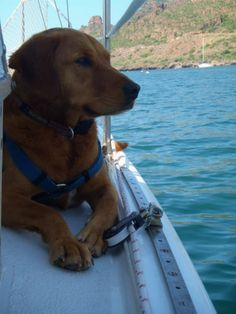 Sailboat watch dog!