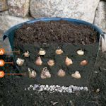thisoldhouse.com  Plant bulbs in layers for weeks of blooms (choose varieties that flower a few weeks apart).