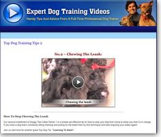 How To Stop Your Dog Chewing The Leash Training Video 2 Leash Training, Dog Training Videos, Big Dogs, Dogs And Puppies, Positive Dog Training, Dog Information, Best Dog Food, Dog Chews, Dog Food Recipes