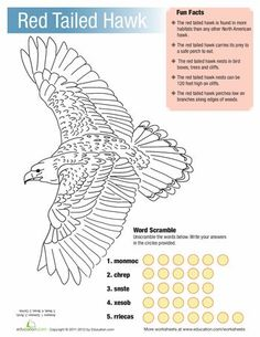 Learn about a common hawk native to North America, the Red-Tailed Hawk! Your child will love coloring this page as he reads some fun facts about this species. Then he'll do a word scramble based on some of the new vocabulary words he's learned. Facts For Kids, Fun Facts, Hawk Facts, Bird Facts, Creative Arts Therapy, Hawk Bird, Red Tailed Hawk, Horned Owl, Wild Creatures