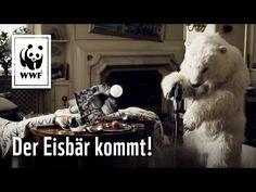 Wenn der Eisbär kommt! - YouTube