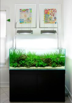 Aquarium - freshwater plants