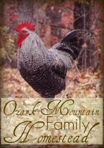 Ozark Mountain Family Homestead Blog ~ tons of information on canning, gardening, chickens and more!