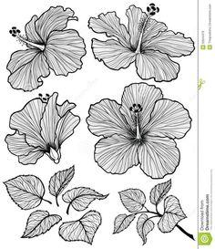 Resultado de imagen para flowers drawings