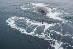 Whales feeding  at Isla Parida #islaparida