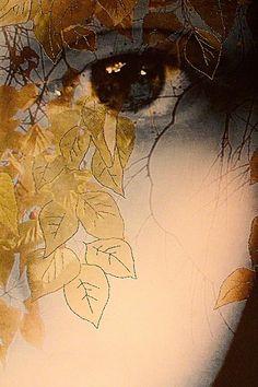 Eyes theme Textile Artist Patricia Little SecretsI detail Patricia Casey Interview: Memory, imagination and dreams Deviant Art, Art Et Illustration, Gcse Art, Aboriginal Art, Australian Artists, Textile Artists, Mellow Yellow, Fabric Art, Mixed Media Art