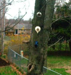 here's my 2 coffee pots and 1 tea pot hanging on a tree waiting for new tenants to move in!  Come on birdies!