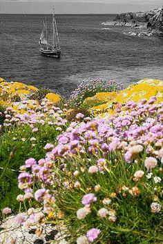 Color Splash, Color Photography, 2 Colours, Dandelion, Black And White, Flowers, Plants, Beautiful, Transportation