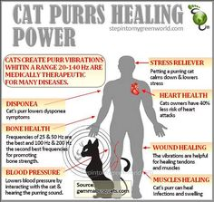 The Healing Power Of Cats   Spirit Science and Metaphysics