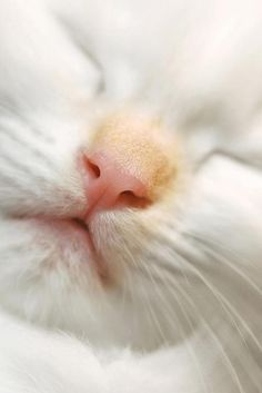 ♥ Just a Teeny Hint of Ginger on that Nose ♥