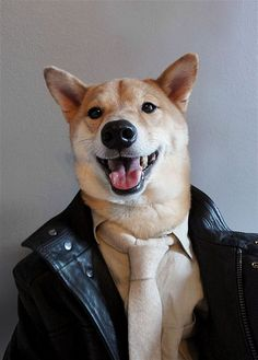 Menswear Dog - A shiba inu with a panache for all things style Menswear Dog, Dogs Up For Adoption, Dog Dresses, Dog Names, Shiba Inu, Happy Dogs, Mans Best Friend, Puppy Love, Dogs And Puppies