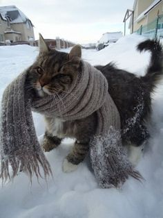 """* * """" Oh fer sure. Me reallys needs dis bulky scarf."""""""