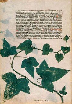 The Carrara Herbal, 12th/13th century
