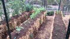 My straw bale garden