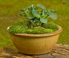 Moss and hosta planter, love it!