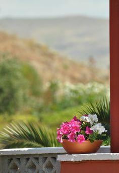 """ Pretty flowers - Lesvos island | via santoriniblog  """