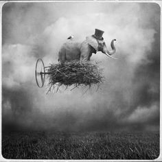 flying elephant in a wheeled nest with wearing a top hat with a bird on it's back.