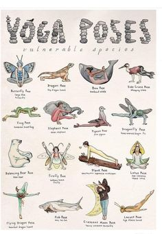 This detailed hand-illustrated yoga poster features sixteen characters demonstra. This detailed hand-illustrated yoga poster features sixteen characters demonstrating sixteen poses. Each pose honors an endangered or vulnerable. Yin Yoga, Sanftes Yoga, Yoga Flow, Yoga Meditation, Yoga Art, Yoga Fitness, Sport Fitness, Yoga Routine, Yoga Inspiration