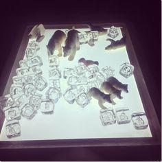 polar bears, polar bear and acrylic ice on the light table, light table, materials for the light table, playing on the light table, winter fun, preschool, winter