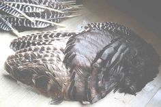 HOW TO CLEAN FEATHERS Freeze the feathers 48 hours to kill germs or lice. (Winter shed or basement freezer) Brush feathers to remove any dirt. (Washing them would remove the oils) Soak quills in bleach for 24 hours, then dip in vinegar to neutralize the bleach. Wear gloves and wash hands thoroughly after handling the feathers.