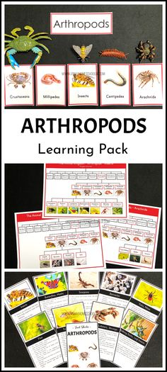 This Montessori inspired printable material is a great way for introducing and gaining first knowledge of the phylum ARTHROPODA or invertebrate animals. Provided are beautiful realistic pictures of each class of arthropods and simple charts for the child to explore.