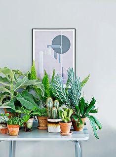 **FROM LEFT** Elephant ear kalanchoe (*Kalanchoe beharensis*), Foxtail fern (*Asparagus densiflorus meyeri*), Golden bristle cactus (*Opuntia microdasys*), Chalk sticks (*Senecio mandraliscae*), Leaf cactus.