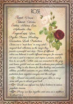 Wicca Herbs, Witchcraft Herbs, Witchcraft Spell Books, Wiccan Spell Book, Green Witchcraft, Magick Book, Magick Spells, Candle Spells, Magic Herbs