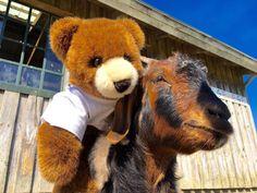 Der Urlaubär von ferienwohnungen.de hat im Tierpark eine neue Freundin gefunden ... #urlaubär