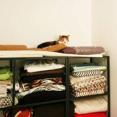 Bobine se cache parmi les tissus Bloup !  #tissus #atelier #cousumain #coussins #deco #hautdegamme #madeinfrance #mif #creations #colors #cat #cute #bobine