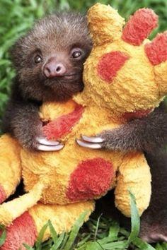 Baby sloth hugging a giraffe doll.
