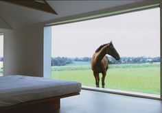 ---- Oh my GOODNESS! The paddock is built around the Bedroom Window!!! Can you imagine!? ♡ ♡ ♡