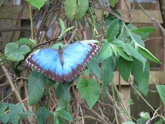 Butterfly Farm, Stratford on Avon