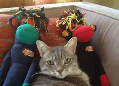 SMAC's got a feline friend.  Give someone you love with #cancer a SMAC! monkey for some love & comfort through their journey. Order here: http://smacmonkey.com/ #SMACancer