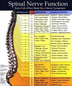 BACK PAIN- Adjust your spine with a chiropractor.