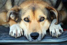 «Mi FIDO di te», l'Asl contro l'abbandono dei cani - http://blog.rodigarganico.info/2015/attualita/mi-fido-di-te-lasl-contro-labbandono-dei-cani/