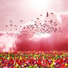 :) Spring Has Sprung, Pet Birds, Nature, Pink, Pictures, Animals, Ears, Destinations, Traveling