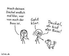 Boss | #islieb #dackel