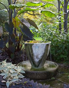 Tea cup garden looking sultry for the summer months...Chanticleer estate in Wayne, PA