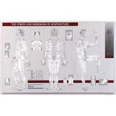 Points & Meridians Of Acupuncture Chart 23 X 36