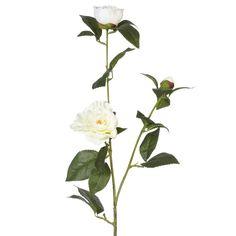 Image result for camellia nobilissima
