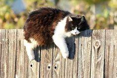 sun-cat