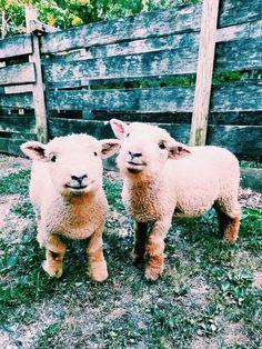 P I N T E R E S T & I N S T A @laceygraceyoung❋ Cute Creatures, Animals Beautiful, Majestic Animals, Beautiful Creatures, Animals And Pets, Cute Baby Animals, Farm Animals, Animal Kingdom, Fur Babies