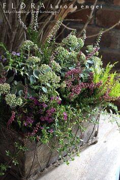 Cafe Plants, Balcony Plants, Container Plants, Container Gardening, Flora Design, Garden Urns, Watercolor Flowers, Garden Inspiration, Flower Pots